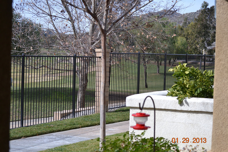 The feeder is just in front of Karel's front patio - notice the golf course on the other side of the fence.