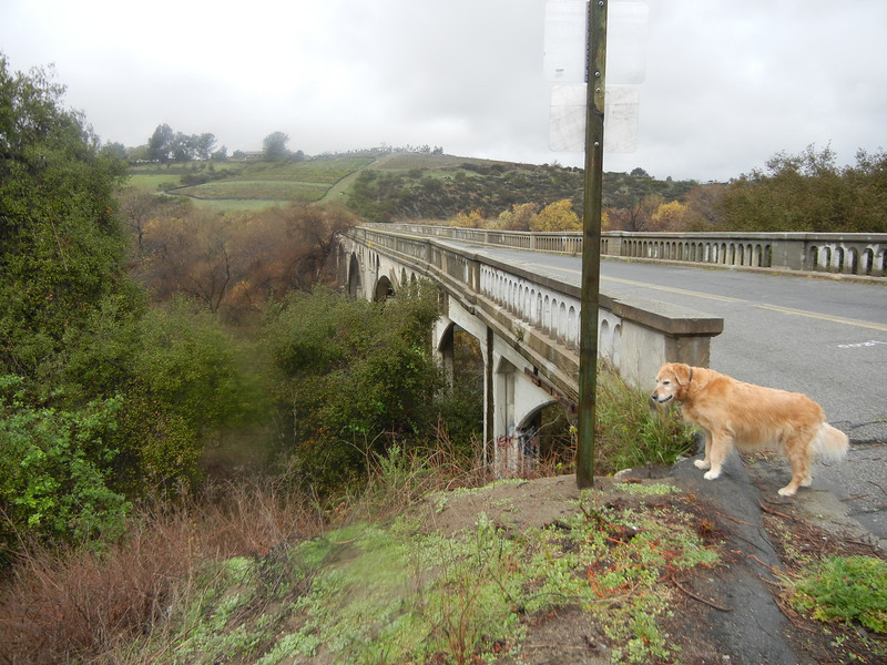 Beau enjoyed any excuse for a roadside stop and short walk. The bridge is now closed to traffic, but we did walk across.