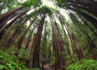 Muir Woods NM