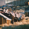 Bodie State Park 05