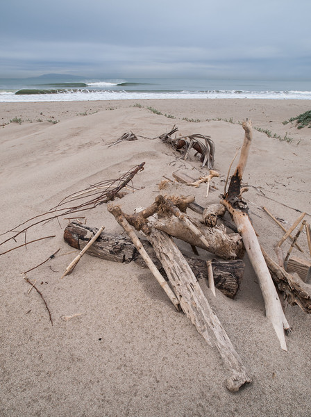 Driftwood on Oxnard Beach