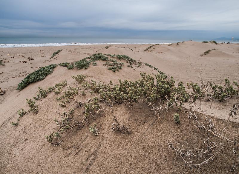 Dunes at Oxnard Beach