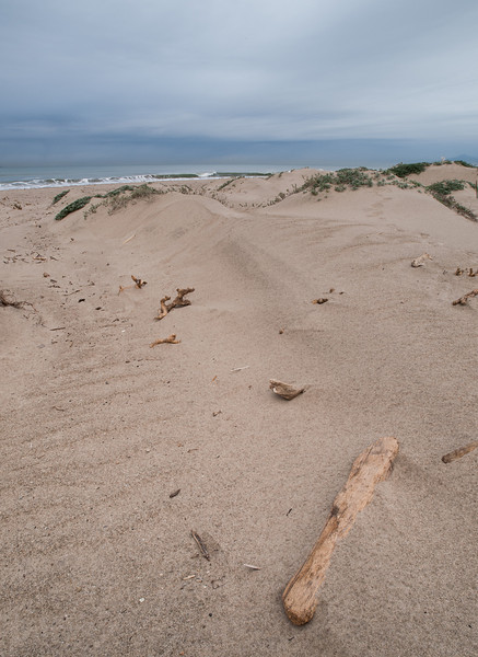 Driftwood on Oxnard Beach