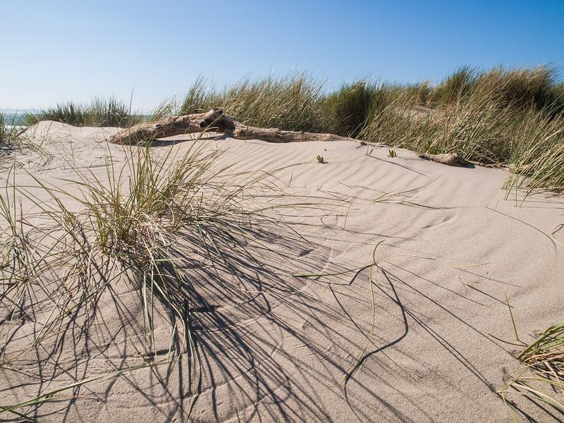Dune & Grass