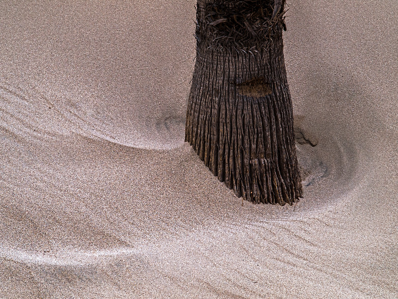Palm Trunk in Sand