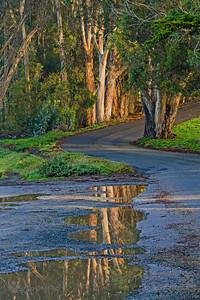 Eucalyptus Road
