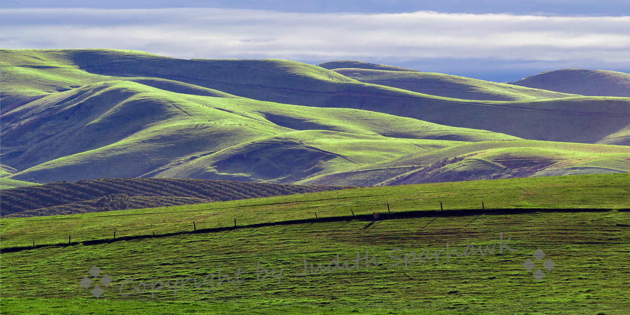 California Winter Green