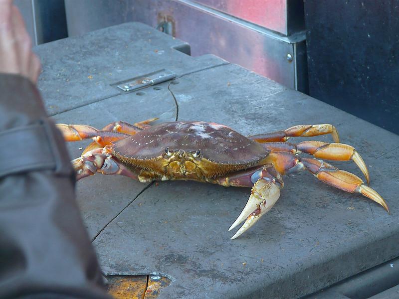 Dead Crab Walking