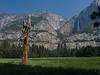 Yosemite Falls & Tree