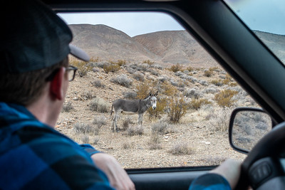 Asking Burro for Directions