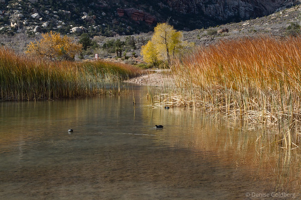 fall colors in grasses, Spring Mountain Ranch State Park