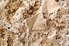 Fossil detail in travertine walls.