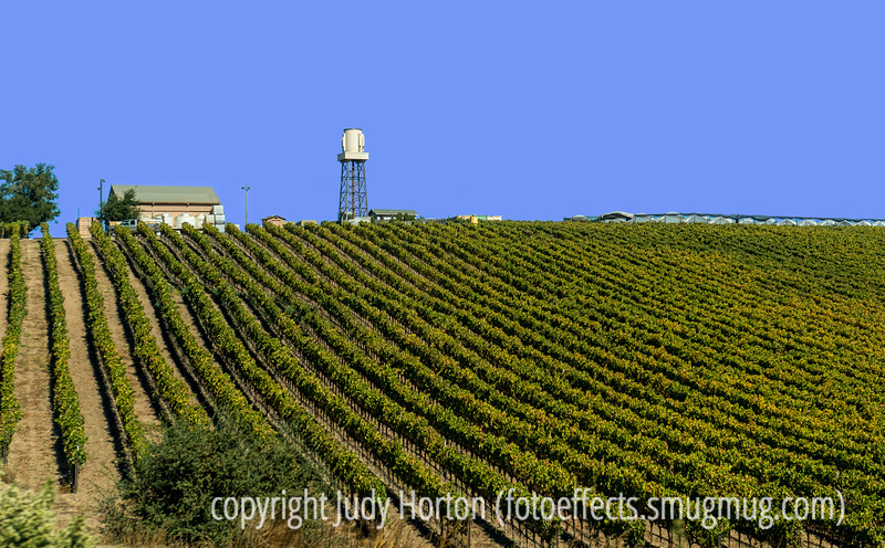 Southern California Wine Country