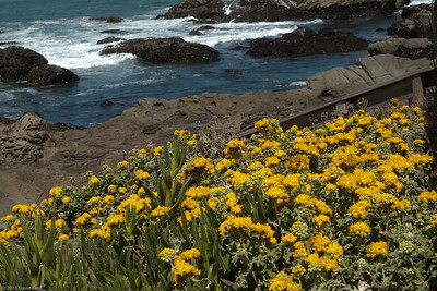 California Visit - June 2010