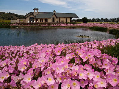 Great landscaping at Wrath winery in Soledad, CA.  Oh and the wine's great too.