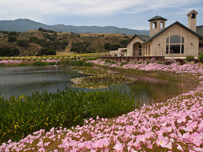Tasting room of Wrath winery in Soledad, CA.  The place is plagued by swallows; you can see them flying here.