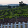 Vineyards @ Paso Robles, CA.