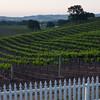Vineyards @ Paso Robles, CA.