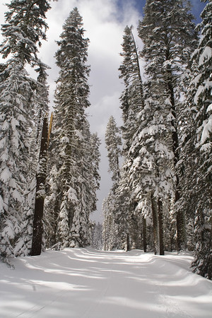 The 10.3 miles trip starts at Badger pass. The journey can be either a perfect glide through the piney woods or an extremely arduous trek, depending on weather and snow conditions. It was the latter for us ;-(