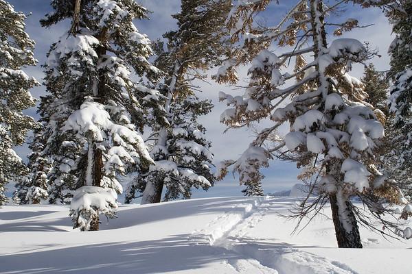 More fresh tracks around the ski hut.
