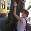Arah tries to climb a knobby English Sycamore tree in San Francisco.