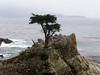 the lonesome cypress on 17 mile drive