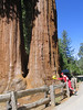 Thursday - The Sequoia trees have to be seen to be believed. It is really hard to imagine trees growing this size.