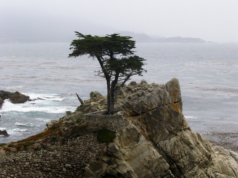Sunday - The lone cypress on 17 mile drive