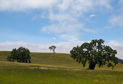 literally Oak Pass Paso Robles is the 3rd largest California wine appellation and still beautiful.