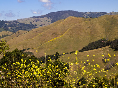 Rte 46 from US 1 to Rte 101 in California is beautiful in spots and makes me pull over.  Wouldn't you?