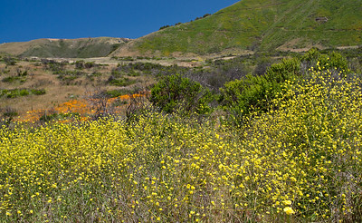 not the best photo on earth, but it shows the wild beauty of the hills in Big Sur really well.  I stopped many times to just drink it in.