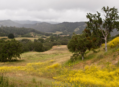 Another shot of the clouds over the hills in Paso Robles, CA.