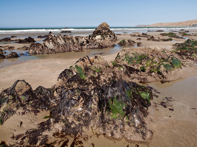 Cayucos State Beach has a very high tide - some of the rock formations are 5 feet high and are teeming with animal life that waits at low tide for the water's return.
