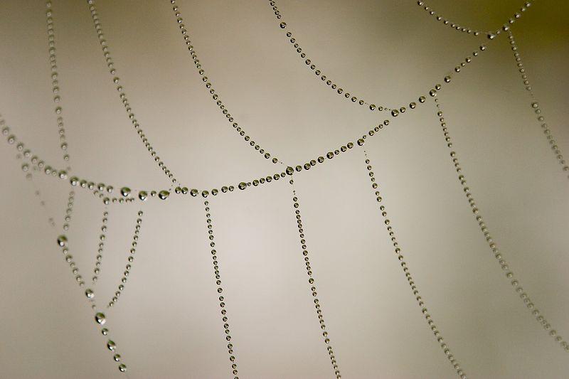 Jacks Peak - Spider Web