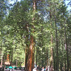 Join the Tram tour of the Mariposa Grove. It is a long walk if you do not take the tram. However if you walk you get a much better view of all the trees, as the Tram only stops three times.