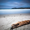 Driftwood on Carmel Beach