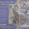 Signage - Bighorn Sheep - Anza-Borrego Desert State Park   2-14-07