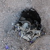 Somebody's Burrow - On the Trail - Anza-Borrego Desert State Park   2-14-07