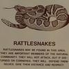 Signage - Rattlesnakes - Anza-Borrego Desert State Park   2-14-07