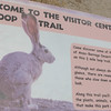 Signage - Loop Trail at Visitor Center - Anza-Borrego Desert State Park   2-14-07