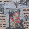 Signage - Desert Plants - Anza-Borrego Desert State Park   2-14-07
