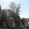 A Tree Growing Between Boulders - Highway 78 to Anza-Borrego Desert State Park  2-14-07