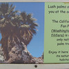 Signage - California Fan Palm - Anza-Borrego Desert State Park   2-14-07