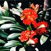 Botanical Gardens - Balboa Park - San Diego, CA  3-31-96