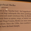 Signage - Loggerhead Shrike - Natural History Museum - Balboa Park - San Diego