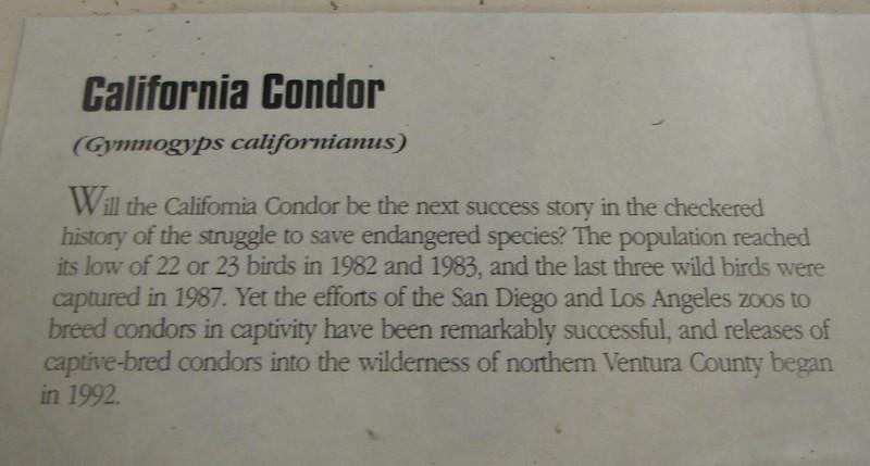 Signage on California Condor - Natural History Museum