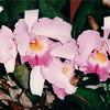 Orchids - Botanical Gardens - Balboa Park - San Diego, CA  3-31-96