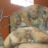 Mountain Lion - Natural History Museum - Balboa Park - San Diego
