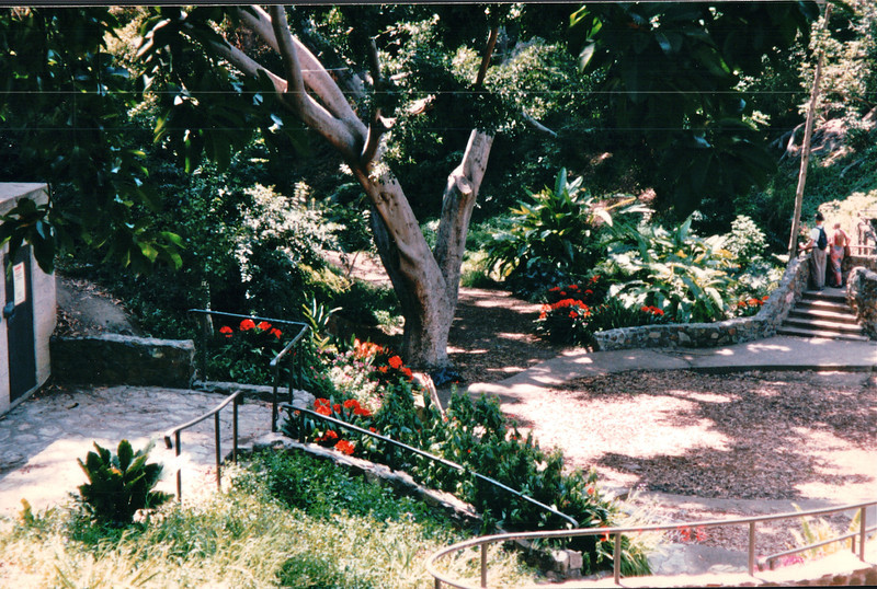 Love the Flowers and Old Trees - Balboa Park - San Diego, CA  3-31-96