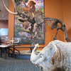 Mastadons - Natural History Museum - Balboa Park - San Diego